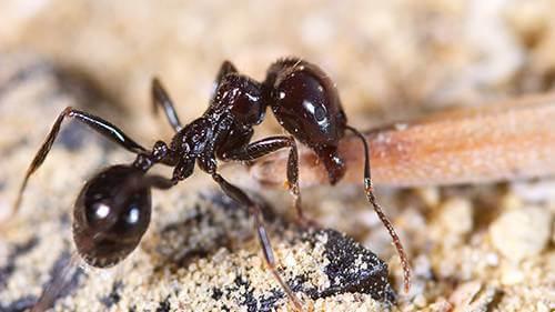 Desinsectacion hormigas